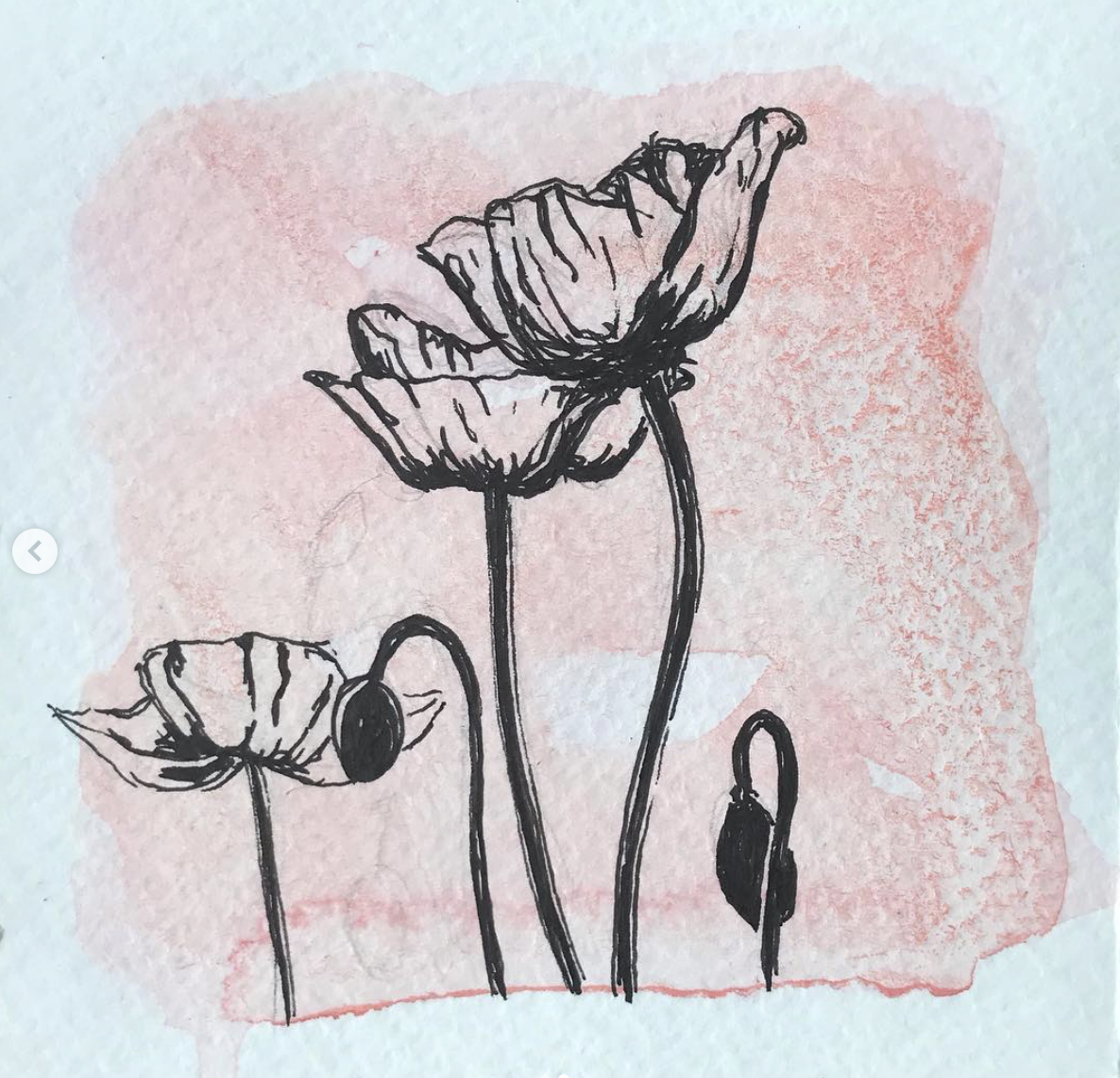 poppies, pen and ink drawing, Leigh ann Torres