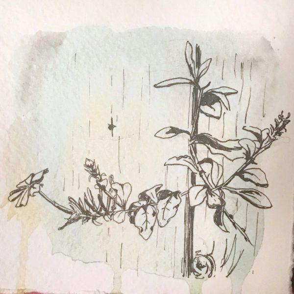 plant peeking through fence