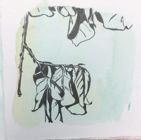 hanging leaves
