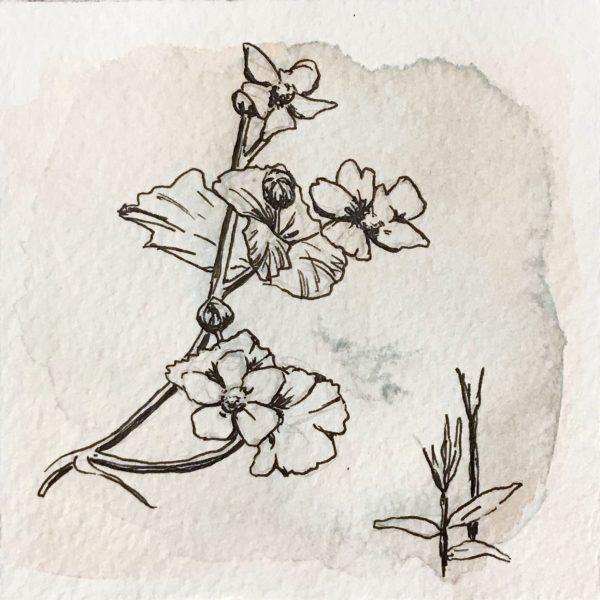 Reaching flowers, Leigh Ann Torres