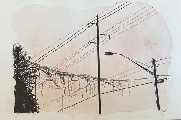 Lines and Vines, Leigh Ann Torres